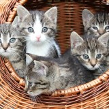 cesta-de-gatitos