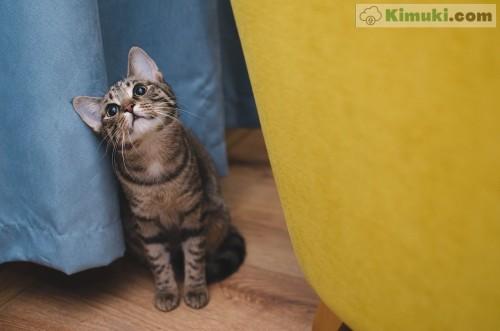 foto-de-lindo-gato.jpg