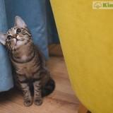 foto-de-lindo-gato