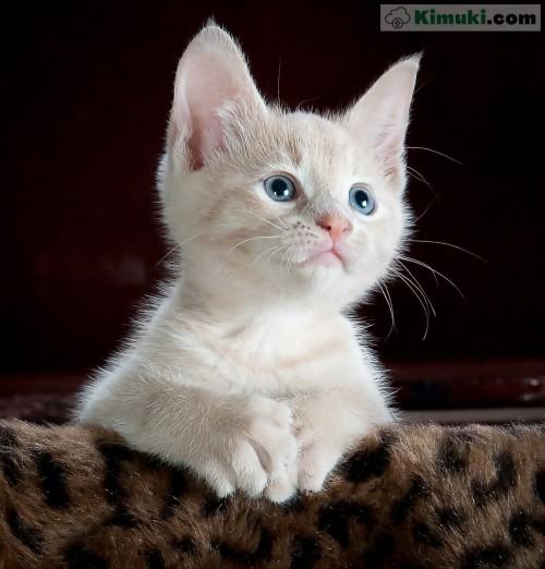gatito-blanco.jpg