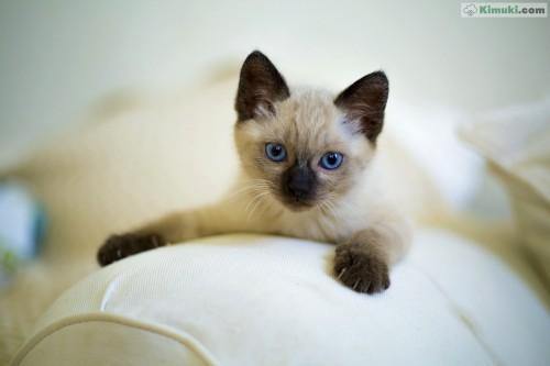 gatito-descansa.jpg