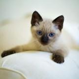 gatito-descansa