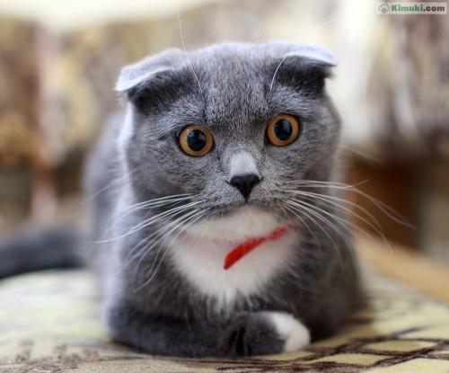 gatito-elegante.jpg