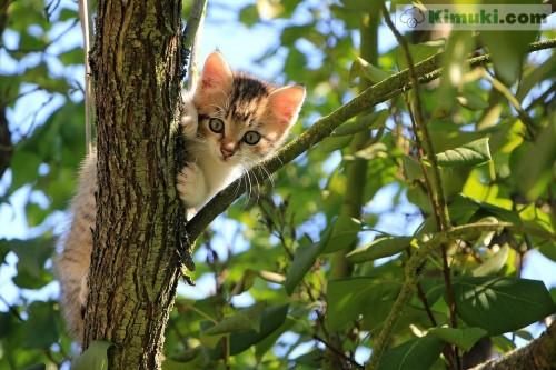 gatito-en-un-arbol.jpg