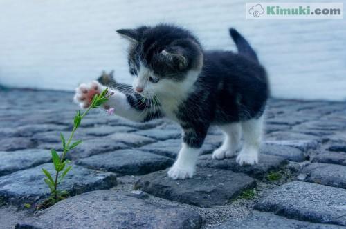 gatito-jugueton.jpg