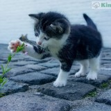 gatito-jugueton