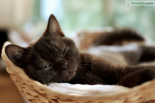gatito-somnoliento.jpg