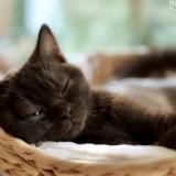 gatito-somnoliento
