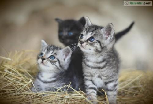 gatitos-chiquitines.jpg