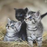 gatitos-chiquitines