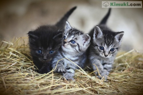 gatitos.jpg