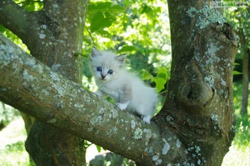 gato-blanco-sobre-arbol.jpg