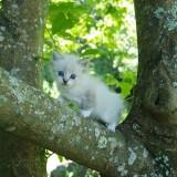 gato-blanco-sobre-arbol