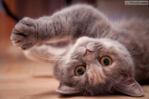 gato-mimoso.jpg