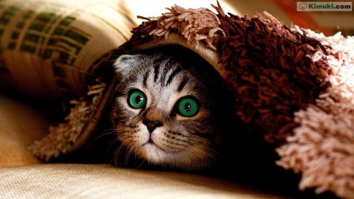 gato-ojos-verdes.jpg