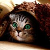 gato-ojos-verdes
