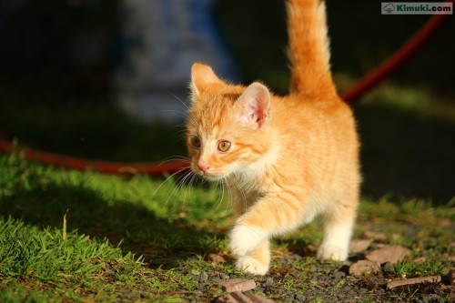 gato-paseando.jpg