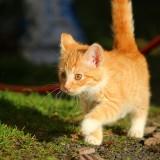 gato-paseando
