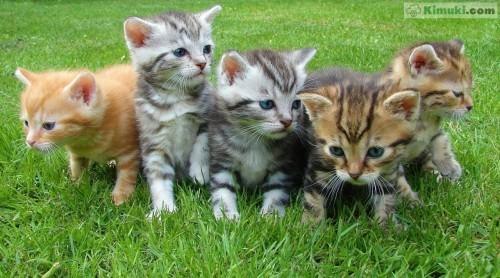 grupo-de-gatitos.jpg