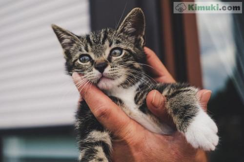 lindo-gatito.jpg