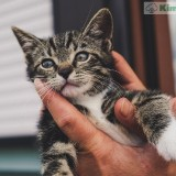 lindo-gatito