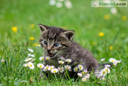 precioso-gatito.jpg