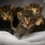 unos-gatitos-preciosos